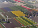 Tulip and hyacinth flower fields, Amsterdam, Netherlands Photographic Print by Adam Jones