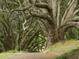 Trees, Central Park, Auckland, New Zealand Photographic Print by Gavriel Jecan