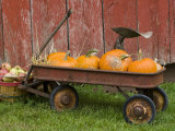 Pumpkins in Old Wagon Photographic Print by Chuck Haney