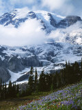 Mt. Rainier from Paradise Meadows, Mt. Rainier National Park, Washington, USA Photographic Print by Charles Gurche
