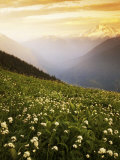 Meadow with helebore and sitka valerian on Green Mountain, Glacier Peak Wilderness, Washington, USA Photographic Print by Charles Gurche