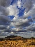 Fork in the road at sunset, Samburu Game Reserve, Kenya Photographic Print by Adam Jones