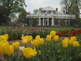 Tulips in Garden of Monticello, Virginia, USA Photographic Print by John & Lisa Merrill