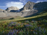 Wildflower meadows below Mount Timpangos, Uinta-Wasatch-Cache National Forest, Utah, USA Photographic Print by Charles Gurche