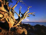 Driftwood at sunrise, Orcas Island, Washington, USA Photographic Print by Charles Gurche