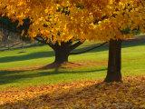 Maple Tree and Fall Foliage, Rock Creek Regional Park, Rockville, Maryland, USA Photographic Print by Corey Hilz