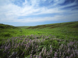 Big Basin Prairie Preserve, Kansas, USA Photographic Print by Charles Gurche