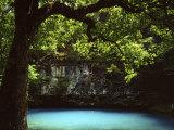 White Oak above Blue Spring, Ozark National Scenic Riverways, Missouri, USA Photographic Print by Charles Gurche