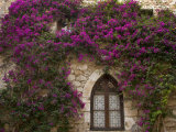 Bright Pink Bougainvillea, Eze, Provence, France Photographic Print by Wendy Kaveney