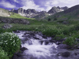 Wildflowers, Ouray, San Juan Mountains, Rocky Mountains, Colorado, USA Photographic Print by Rolf Nussbaumer