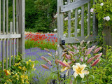 Garden Gate, Bainbridge Island, Washington, USA Photographic Print by Don Paulson