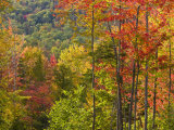 Fall in a Forest in Grafton, New Hampshire, USA Photographic Print by Jerry & Marcy Monkman