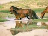 Wild Horses, Gobi Desert, Mongolia Photographic Print by Gavriel Jecan