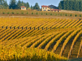 Black Walnut Inn and Vineyards of Bella Vida and Maresh, Dundee, Oregon, USA Photographic Print by Janis Miglavs