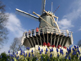 Keukenhof Windmill and Flowers, Keukenhof Gardens, Lisse, Netherlands Photographic Print by Cindy Miller Hopkins