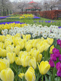 Keukenhof Gardens, Lisse, Netherlands Photographic Print by Adam Jones
