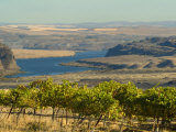 Columbia River Surounded Agriculture, Central Washington, USA Photographic Print by Janis Miglavs