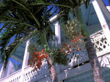 Colonial Architecture and Palm Details, Key West, Florida, USA Photographic Print by David Herbig