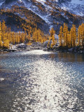 Larch trees in fall on Leprechaun Lake, Alpine Lakes Wilderness, Enchantment Basin, Washington, USA Photographic Print by Charles Gurche