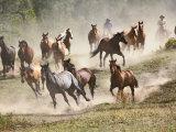 Horses Running During Roundup, Montana, USA Fotografisk trykk av Adam Jones