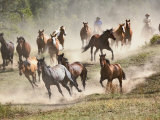 Horses Running During Roundup, Montana, USA Photographic Print by Adam Jones
