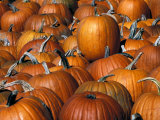 Fall Pumpkins Photographic Print by Marilyn Parver