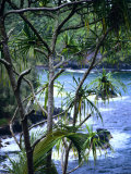 Hilo, Big Island, Hawaii Photographic Print by Jerry Ginsberg