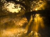 Shafts of Sunlight, Magnolia Plantation, Charleston, South Carolina, USA Photographic Print by Corey Hilz