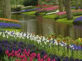 Tulip and Hyacinth Garden, Keukenhof Gardens, Lisse, Netherlands, Holland Fotodruck von Adam Jones