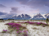 Wildflowers and Fairweather Range, Alsek River Valley, Alaska, USA Photographic Print by Don Paulson