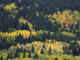 Aspen Trees, Endovalley, Rocky Mountain National Park, Colorado, USA Photographic Print by Rolf Nussbaumer
