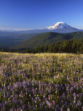 Mt. Adams in distance, Meadow, Goat Rocks Wilderness, Washington, USA Photographic Print by Charles Gurche