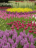 Keukenhof Gardens, Lisse, Netherlands, Holland Photographic Print by Adam Jones