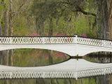 Foot Bridge with Azaleas and Spanish Moss, Magnolia Plantation, Charleston, South Carolina, USA Photographic Print by Corey Hilz
