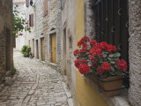 Cobblestone Street and Geraniums, Bale, Croatia Photographic Print by Adam Jones