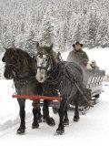 Winter Sleigh Ride, Lake Louise, Alberta, Canada Fotografie-Druck von Cindy Miller Hopkins