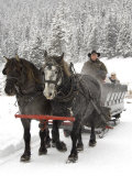 Winter Sleigh Ride, Lake Louise, Alberta, Canada Photographic Print by Cindy Miller Hopkins
