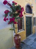 Bougenvillia Vine in Pot, Oia, Santorini, Greece Photographic Print by Darrell Gulin