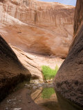 Willow Gulch Area in Grand Staircase, Escalante National Monument, Utah, USA Photographic Print by Diane Johnson