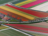 Flower field patterns surrounding Amsterdam, Holland Photographic Print by Adam Jones