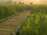 Boardwalk through cattails in fog, Huntley Meadows, Fairfax, Virginia, USA Photographic Print by Corey Hilz