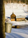 Sap buckets on Maple Trees, Pomfret, Vermont, USA Fotodruck von Jerry & Marcy Monkman