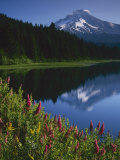 Mt. Hood from Trilliam Lake, Mt. Hood National Forest, Oregon, USA Photographic Print by Charles Gurche