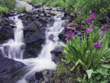 Waterfall and Wildflowers, Ouray, San Juan Mountains, Rocky Mountains, Colorado, USA Photographic Print by Rolf Nussbaumer