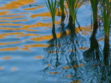 Reflections on Malheur River at Sunset, Oregon, USA Fotografie-Druck von Nancy Rotenberg