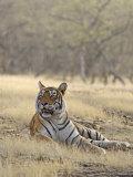 Royal Bengal Tiger, Ranthambhor National Park, India Photographic Print by Jagdeep Rajput