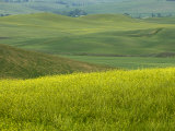 Countryside, Val D'Orcia, Siena Province, Tuscany, Italy Photographic Print by Sergio Pitamitz