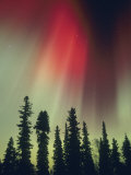 Aurora Borealis, Fairbanks Area, Alaska, USA Photographic Print by Kevin Schafer