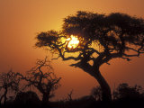 Silhouetted Trees near Water Hole, Savuti Marsh, Chobe National Park, Botswana Photographic Print by Paul Souders