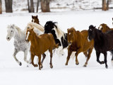 Running Horses on Hideout Ranch, Shell, Wyoming, USA Fotografisk trykk av Joe Restuccia III